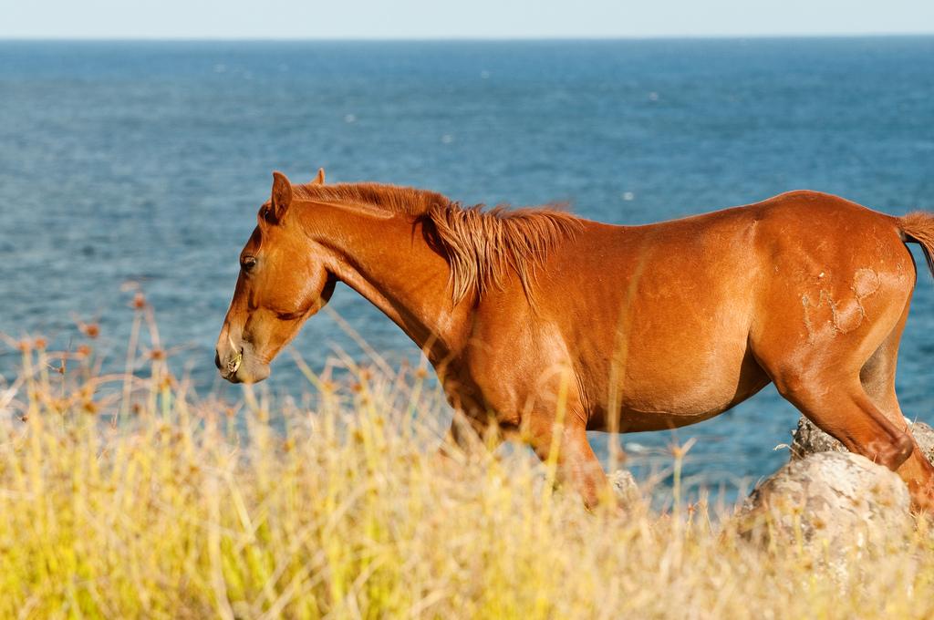 caballo-salvaje.jpg
