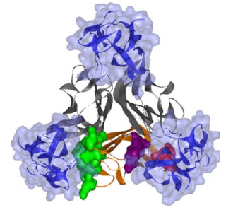 anti-TNF_Vedolizumab